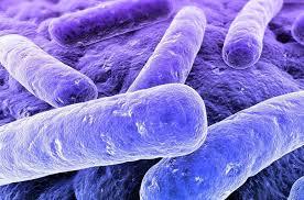 Microbiota y enfermedades ginecológicas
