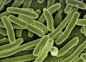 Microbiota y reproducción asistida