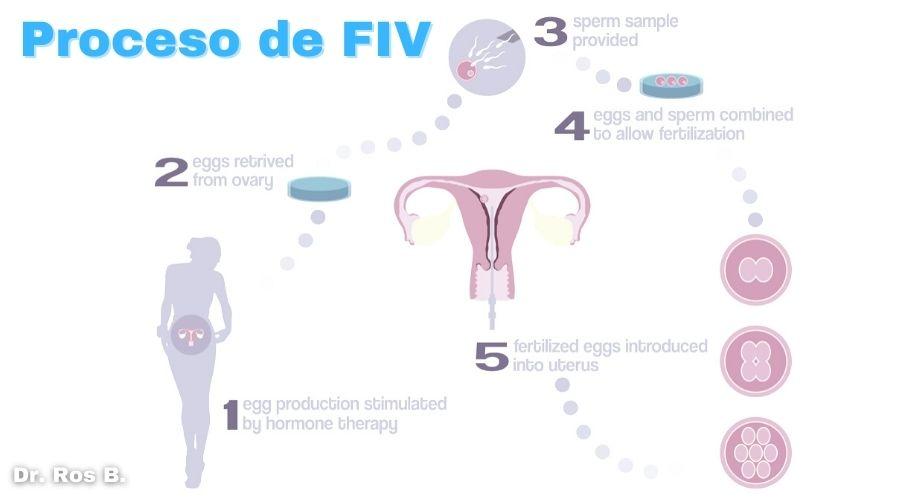 transferencia embrionaria en que consiste