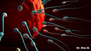 en que consiste la reproduccion asistida